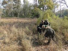 Venturing Into Jungle On Elephant Back
