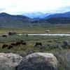View Absaroka Range
