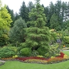 View Butchart Gardens In Victoria BC