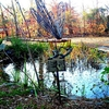 Cape Fear Botanical Gardens