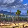 View Coconino Landscape AZ