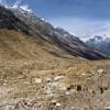 View Gangotri Valley UT Himalayas