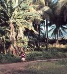 Chuuk Lagoon Diving Site