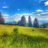 View Swiss Alps Landscape