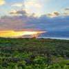 Pico Island Vineyard Culture