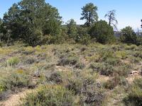 Vineyard Trail 131