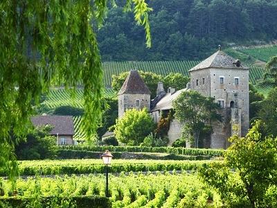 Vineyards In Gevrey - Chambertin