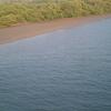 Mangroves On Valapattanam River