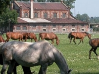 Walewice - Palace and Horse Stud Farm