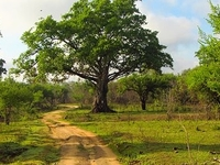 Wasgamuwa National Park