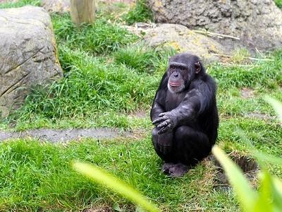 @ Wellington Zoo - Northland NZ