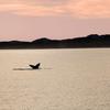 Whale Watching Near Maniitsoq