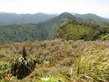 Whareorino Hunting Area - North Island - New Zealand