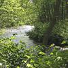 Whippany River