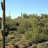 Wickenburg Countryside