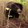 Wild Animal Karlapat 2