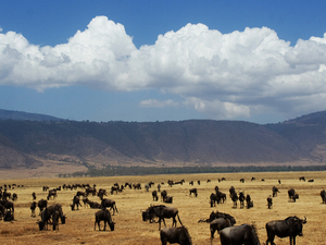 14 Days Safari. Trekking and Mountain-Climbing Photos