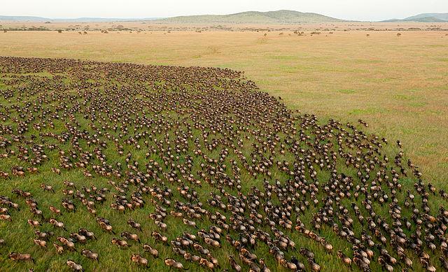 4 Days Spectacular Camping Safari Photos
