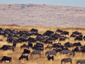 Tanzania Wildebeests Migration Safari Photos