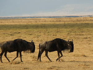 5 Days Ngorongoro Safari & Trekking: Emapkaai to Natron