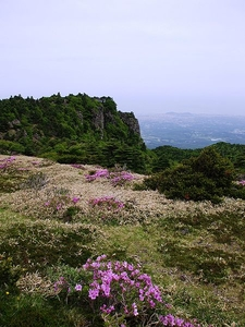 Wildflowers On Mount Halla
