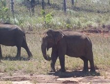 Cotigoa Wildlife Sanctuary