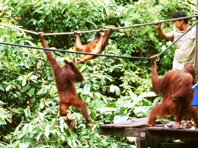 Wild Men Of Borneo