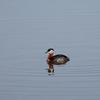 Williams Lake Canada