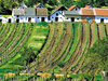 Wine Culture In Lower Austria