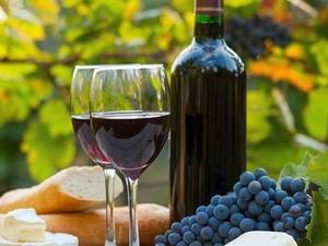 Wine Passion Photos