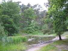 Wokefield Common