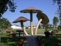 World's Largest Mushroom