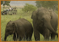 Wildlife Safari At Pench