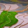 Yen Bai Rice Terraces