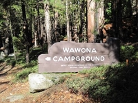 Yosemite Wawona Campground