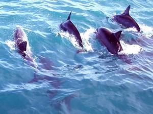 6 Day Zanzibar Spicy Beach With Dolphin Swimming Tours