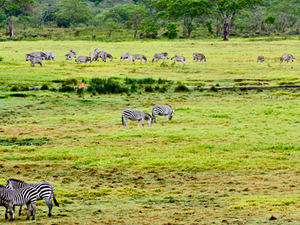 Arusha Safari Package Photos