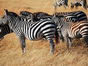 Masai Mara Trip Photos