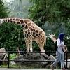 Zoo Negara - Kuala Lumpur