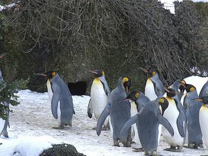 Go Wild in Zürich. Best of Zürich City Tour with Zoo Photos