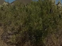 Usery Mountain Rec Area
