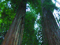 Crescent City Redwoods Koa Campground