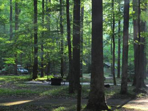 Great Smoky Mtn Elkmont Campground