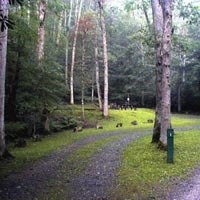 Seneca Shadows Campground