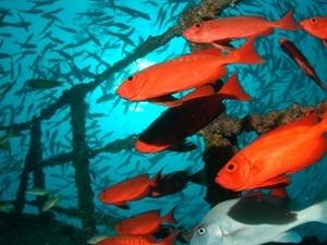 2 day 4 dive Scuba Diving Package - Diani Beach Photos
