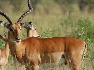 7 Days Lake Manyara, Lake Natron, Lobo Area (Northern Serengeti), Central Serengeti, Serengeti National Park Tanzania Wildlife S Photos