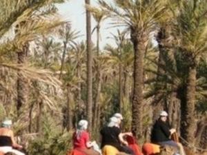 90-Minute Camel Trek in Marrakech Photos