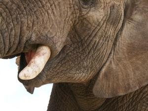 Adventures with Elephants Photos