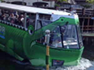 Alligator Amphibious Tour. Photos