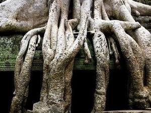 ANCIENT EMPIRE: EXPLORE ANGKOR Photos